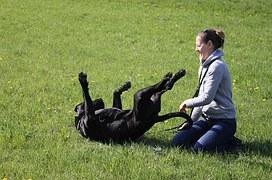dog-594750__180
